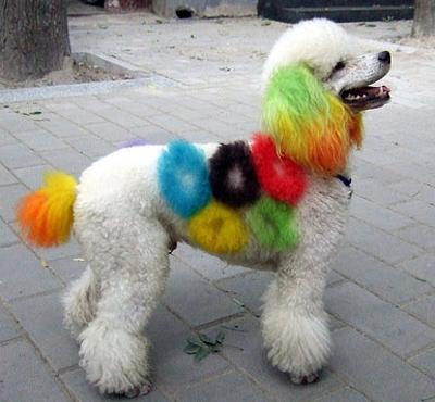 1-.El Perro Olimpiada