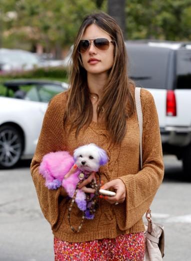 2-.Perro en manos de una celebrity