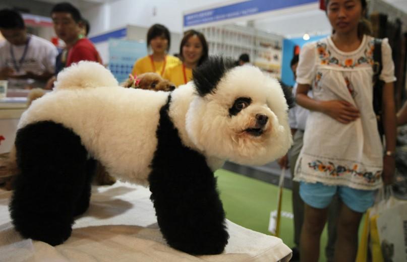 9-. El perro panda