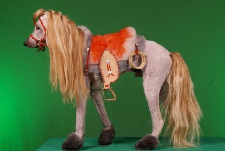 11-. Perro caballo