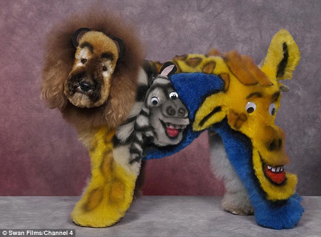 13-. Perro Madagascar