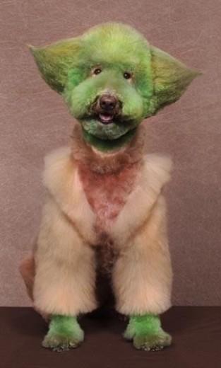 15-. Perro Yoda
