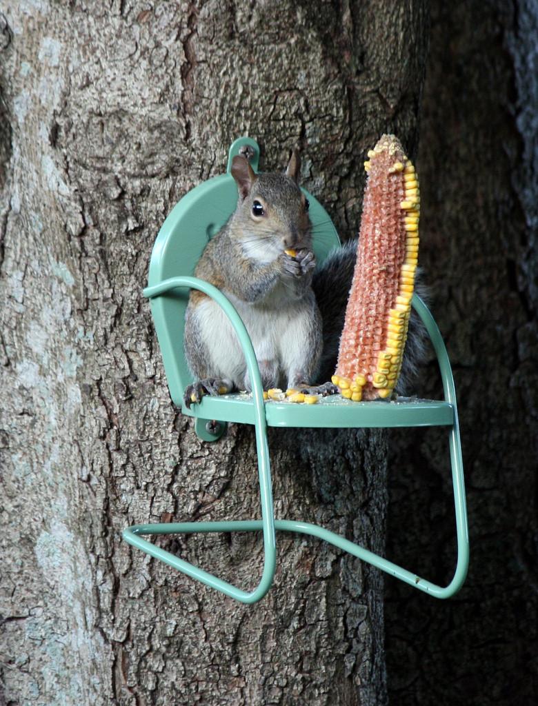 6. Una silla para ardillas