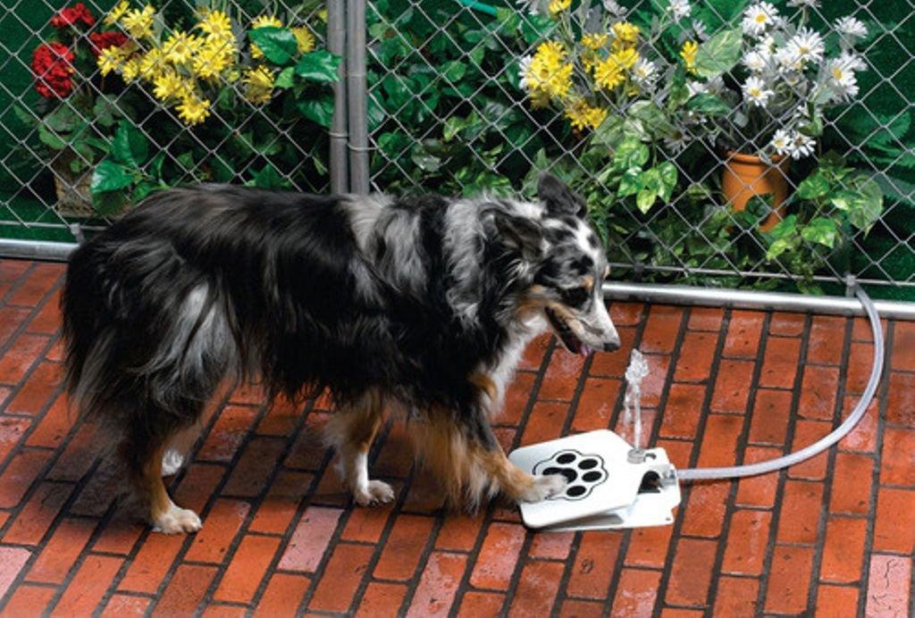 17. Bebedero para perros en forma de fuente