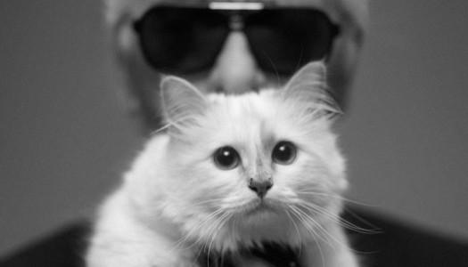 Choupette, la gatita mas famosa de instagram