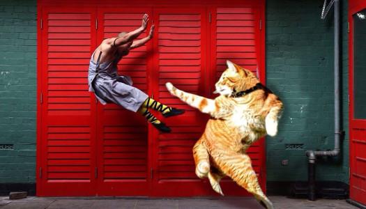 Gatos flexibles photoshopeados