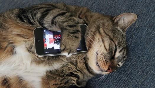 ¿Y si tu gato te mandara whatsapps?