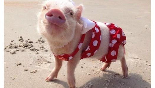 ¡Cómo posar en las fotos de la playa!