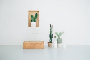 large_cactus-design-store-copenhagen-1