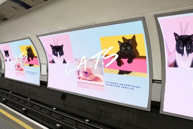 cats london  (2)