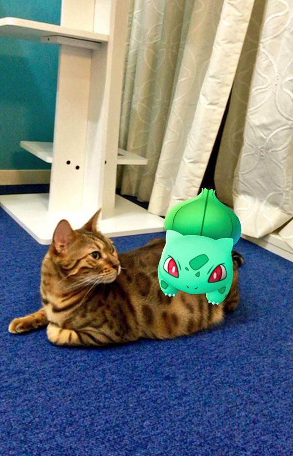 pokémon mascotas (15)