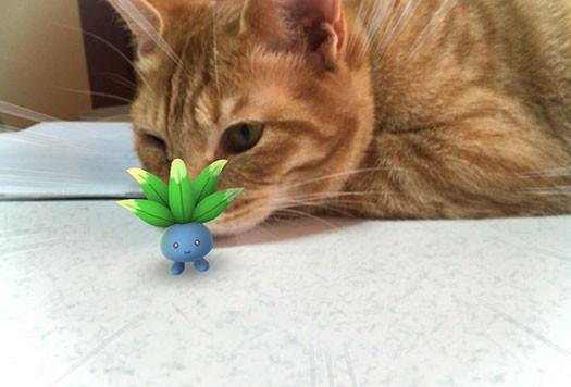 pokémon mascotas (9)