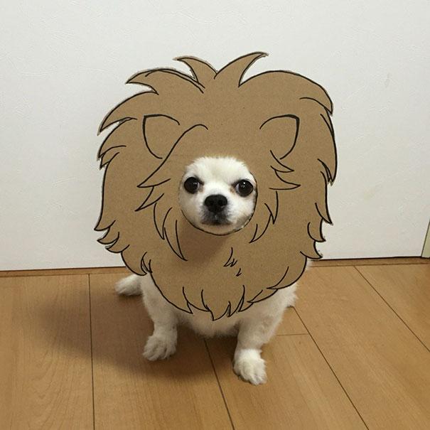 disfraz perro halloween  (3)