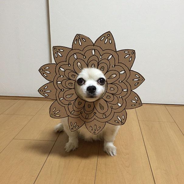 disfraz perro halloween  (6)