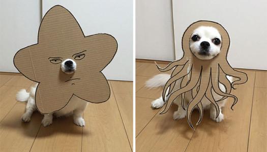 ¡Disfraces de cartón para tu mascota en Halloween!
