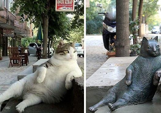 gato estambul  (2)
