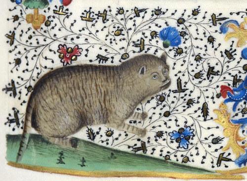 gatos feos medievales (17)