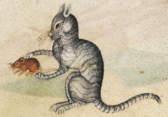 gatos feos medievales (6)