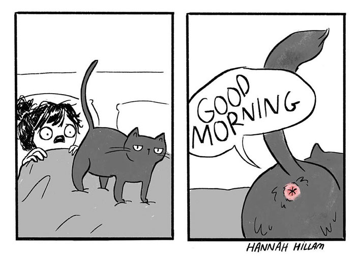 gatos dibujos comics  (3)