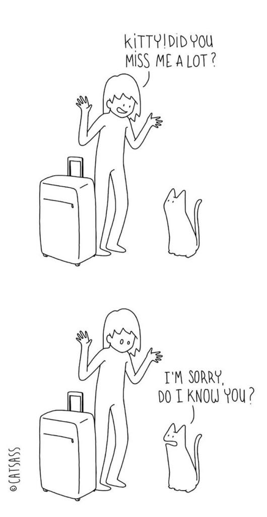 gatos dibujos comics  (6)