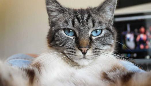 Catmera, ¿sabías que hay una app para que los gatos se hagan selfies?
